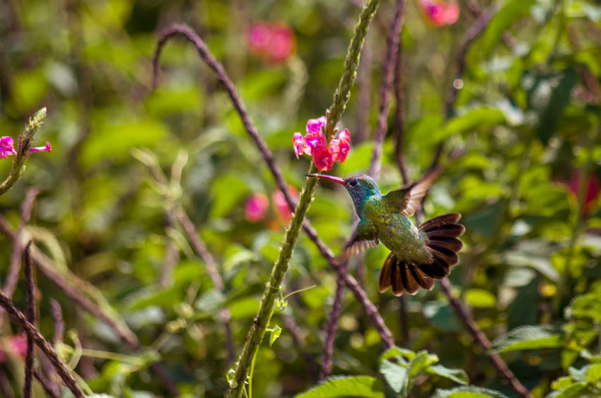 hard to catch Animal Themes Animals In The Wild Bird Day Green Humming Bird Nature Selective Focus Wildlife