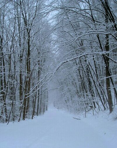 first day of spring, northeast united states... A Walk In The Park Walking In The Snow Scenery Shots Nature_collection Stunning_shots Peaceful Place