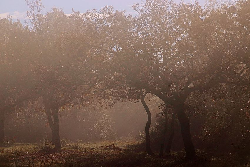 Fog and sun at the same time Fog Tree Nature No People Tranquility Land Plant Backgrounds Beauty In Nature Outdoors Full Frame Scenics - Nature Forest Environment Tranquil Scene