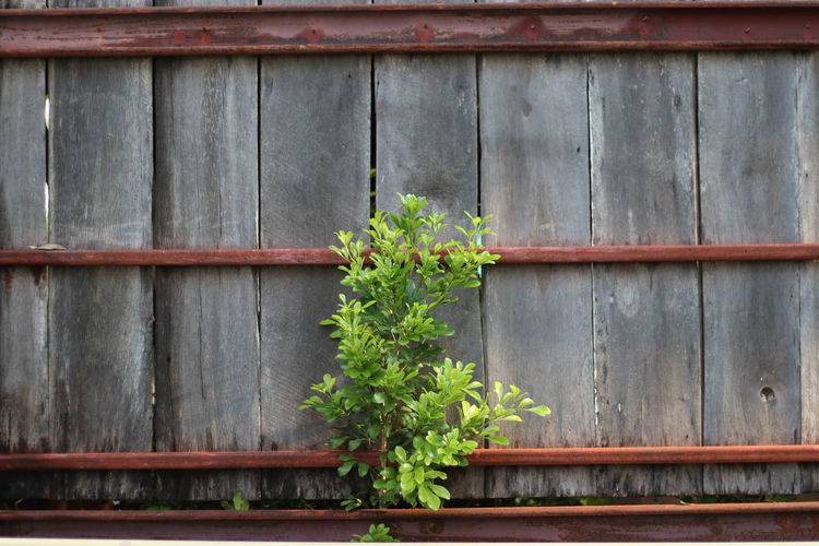 Architecture Building Exterior Built Structure Day Flower Green Color Growth Ivy Nature No People Outdoors Plant Wood - Material