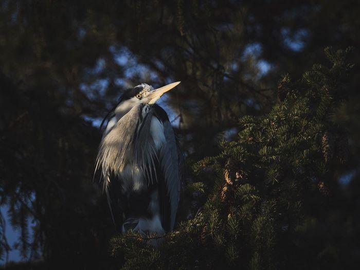 High angle view of gray heron perching on tree