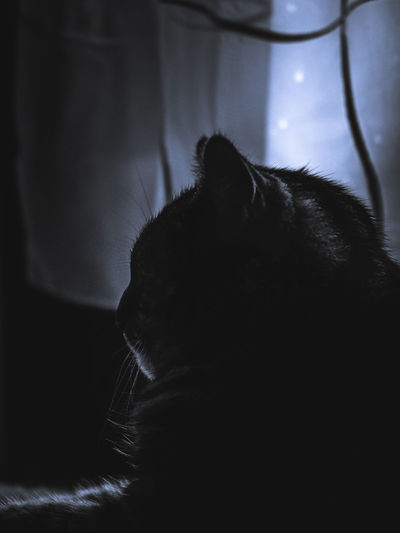 Mammal Animal Themes One Animal Cat Animal Domestic Cat Pets Domestic Feline Domestic Animals Vertebrate Indoors  Close-up No People Relaxation Animal Body Part Whisker Black Color Animal Hair Focus On Foreground Animal Head