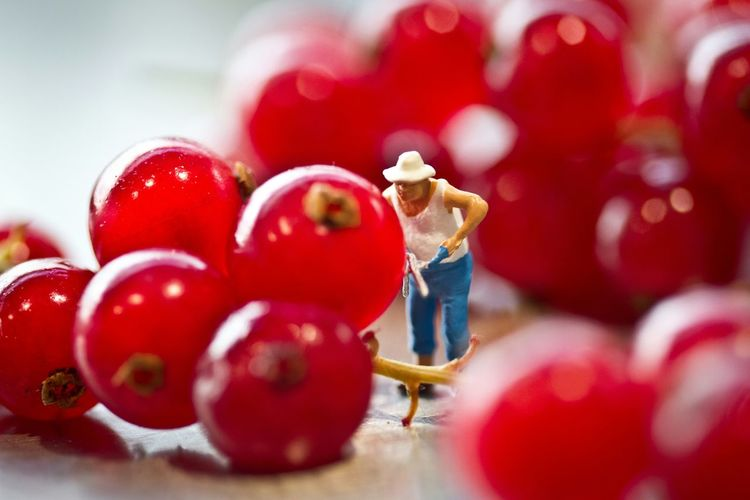 Close-Up Of Figurine With Red Currants On Table
