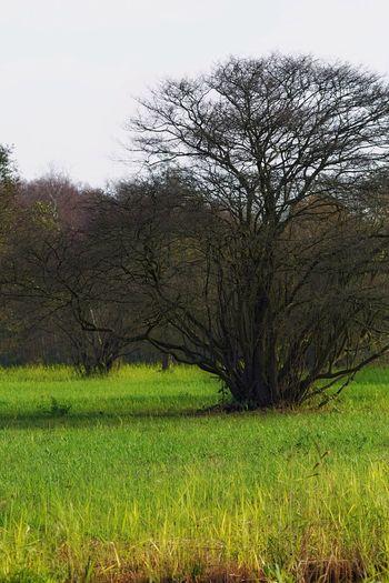 Landscape_Collection Orton Effect