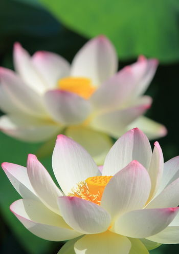 Taking Photos Hi! Lotus Flower Check This Out