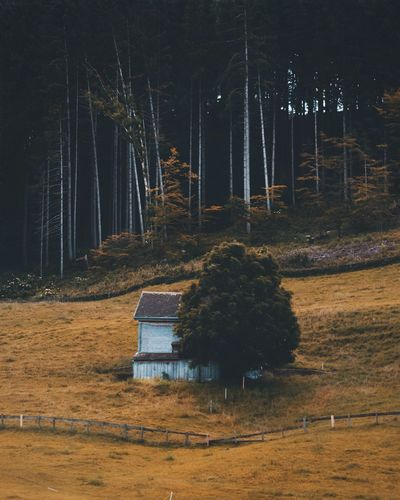 Old Cabin Trees Mood Cabin Autumn Colors Summer Old Abandoned Old Buildings Nature Landscape