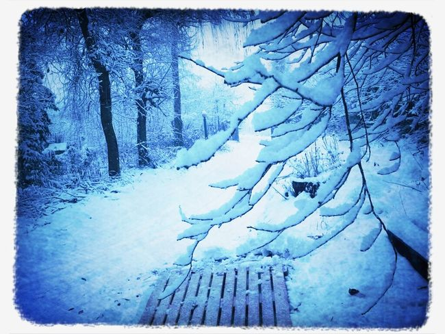 Prova... Snow