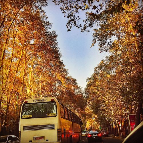 Taking Photos Fall IN THE STREETS Trees