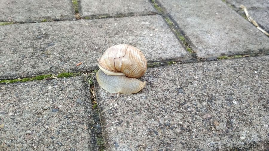 High angle view of snail on footpath