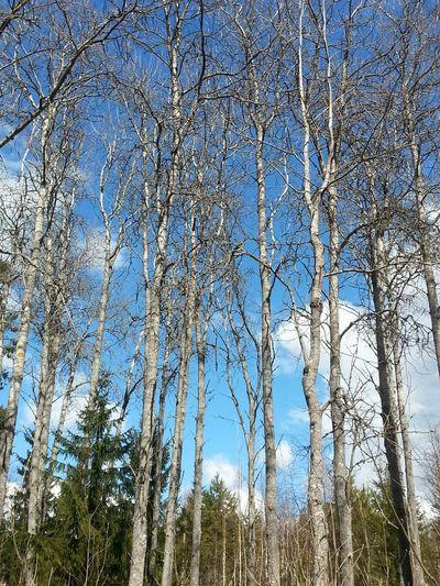 Tree Tree Porn Tree And Sky Old Tree