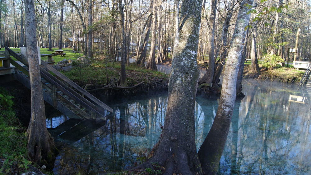 Beauty In Nature Blue Water Camping Clear Water Day Florida Forest Ginni Springs Lake Landscape Natural Pool Nature No People Outdoors Reflections River Scenics Stairs Steps Tranquil Scene Tranquility Tree Tree Trunk Tree Trunk Water