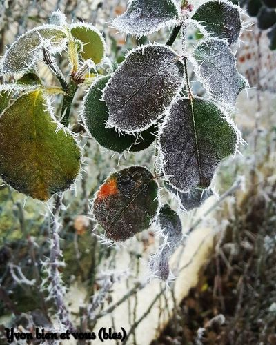 winter Winter Yvonbien Ice Freezing Green Nature Leaf Nature Growth Day Beauty In Nature Close-up Outdoors No People Plant