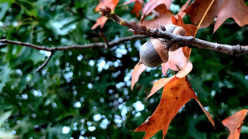 EyeEm Selects Tree Nature Growth Outdoors Leaf Day Branch No People Low Angle View Beauty In Nature Close-up