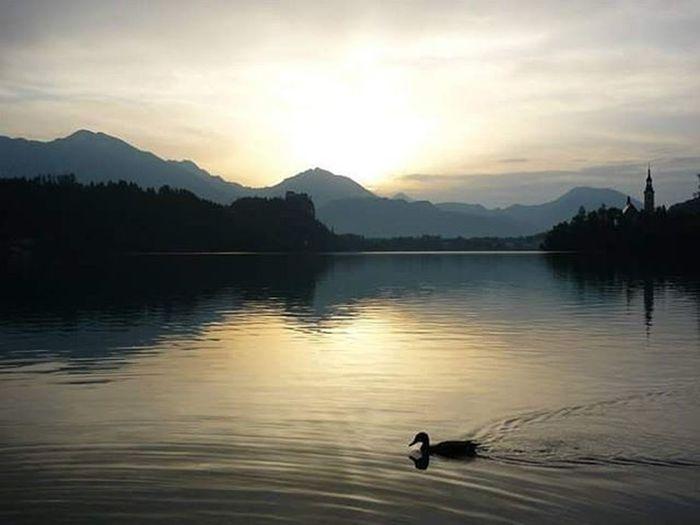 Bled Kacsa Duck Napfel Napkelte Sunrise Sunrise_sunsets_aroundworld Hegy Hegyek Mountain To  Lake Naturephotography Nature Naturelovers Naturelovers Naturelovers Instanature Természet Természetfoto Nofilterneeded Nofilter
