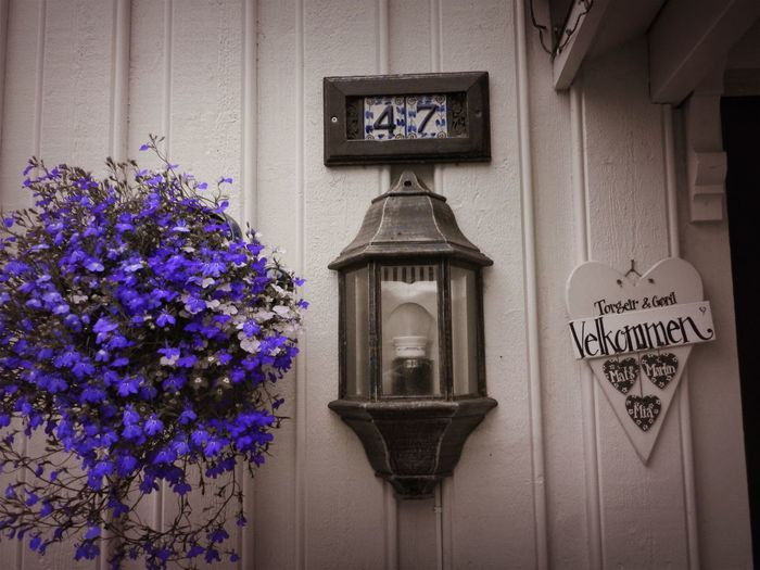 Norway Architecture Black And Purple Building Built Structure Communication Day Flower Flowering Plant Freshness Hanging Indoors  Information Message Nature No People Plant Purple Sign Text Western Script Window
