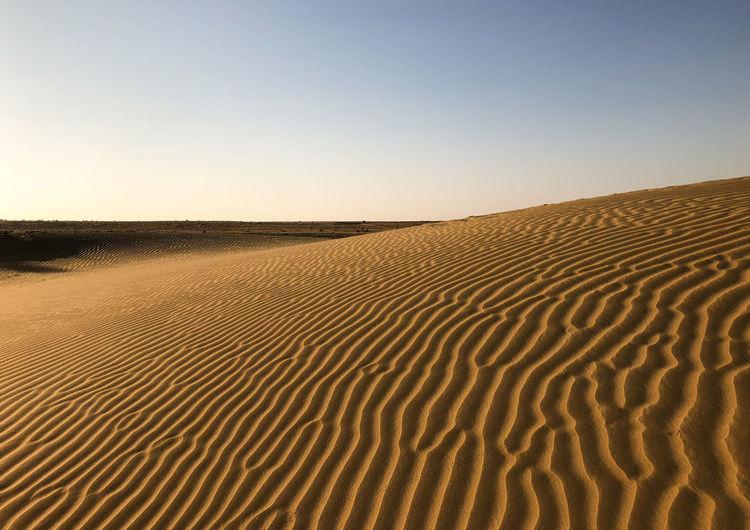 Desert India Sheepherd Travel Arid Climate Camel Desert Jaisalmer Landscape Nature Obrigado Outdoors Rajasthan Sand Sand Dune Scenics Sheep Sunset Thar Desert