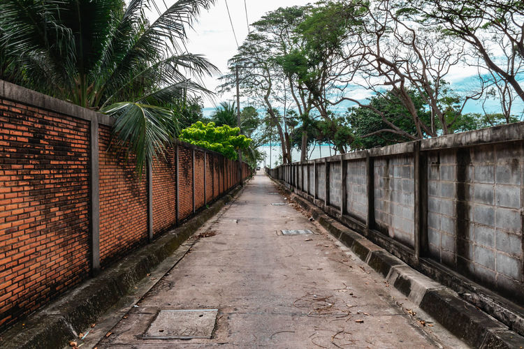 Empty footpath along palm trees