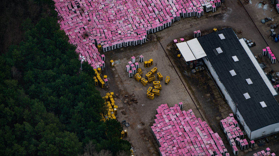 High angle view of pink flowers on road by trees