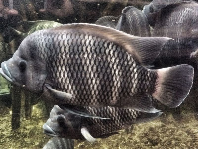 EyeEm Animal Lover Water_collection Fish Zoo Life Fishes