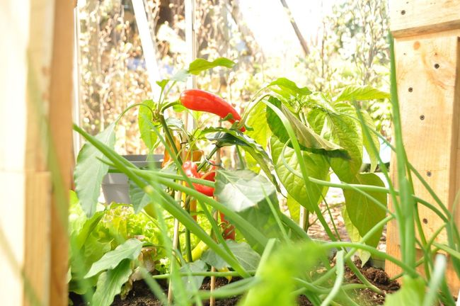 Greenhouse Growth Leaf Plant Flower Selective Focus Stem Green Color Red Freshness Fragility Nature Green Day Growing Springtime Focus On Foreground Blossom Vibrant Color Petal First Eyeem Photo
