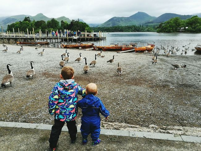 The Lake District  Outdoors Childhood Togetherness Mountain Range Toddlerlife Brother Feeding The Geese Brotherly Love Siblings