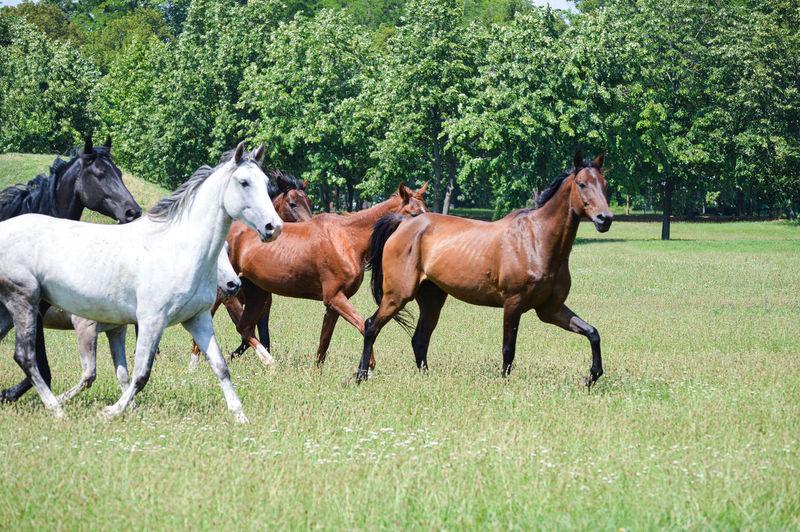 Horses running in ranch
