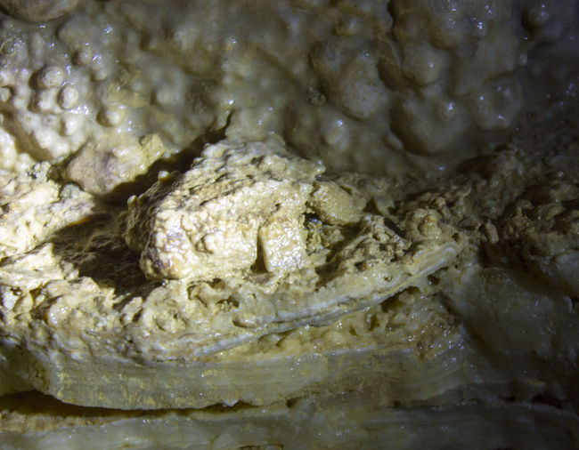 Stone frog Budapest Budapest, Hungary Frog Rock Rock Formation Cave Cave Formations Caves Stone