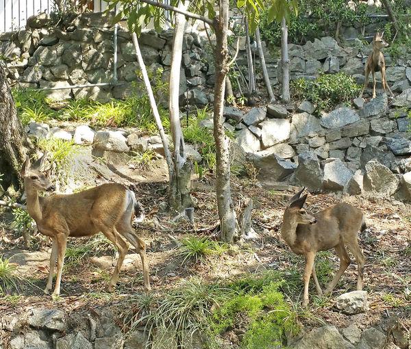 Animal Themes Deer Doe Mommy And Babies Neighborhood No People Outdoors Tree