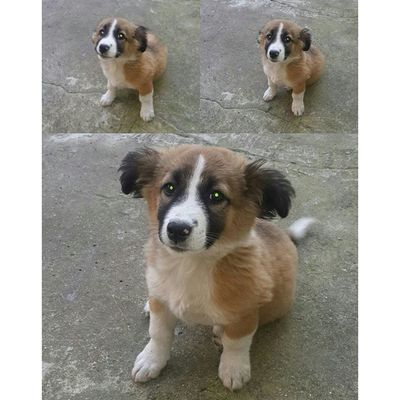 ? ✔ Nofilter Puppy Collage Kolaj foto picture dog yavru köpek sevimli instadog instapuppy funny vscodog