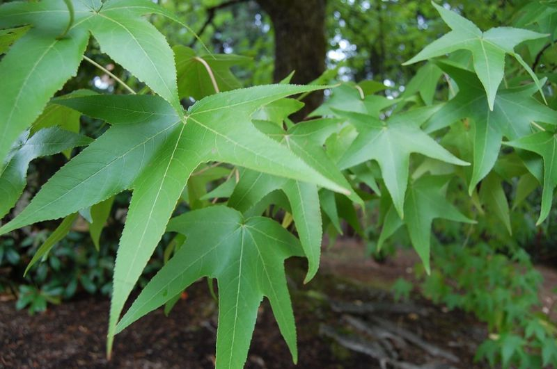 Beauty In Nature Botany Close-up Freshness Green Green Color Growth Leaf Leaves Lush Foliage Nature Outdoors Plant