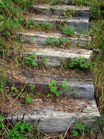 Old Stairways Never Die, stepping into a new life. EyeEm Best Shots EyeEm Nature Lover EyeEmBestPics Stairway Steps The Week On EyeEm Balk Beam Beauty In Nature Eye4photography  Grass Green Color Growth Plant Growth Plants Grow In Odd Places Stairway To Heaven Stairways Stairwaytodecay Stepping Stones Steps And Staircase Steps And Staircases Wood - Material Wooden Stairs Wooden Steps Wooden Texture