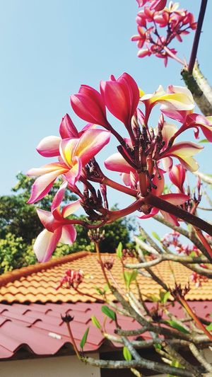 Flower No People Growth Nature Beauty In Nature Pink Color Low Angle View