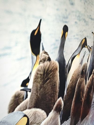 Austral Antarctica Antarctic Pinguin Taking Photos Photography Bigbird Winner