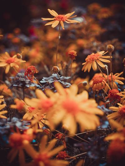 Close-up of flowering plants during autumn