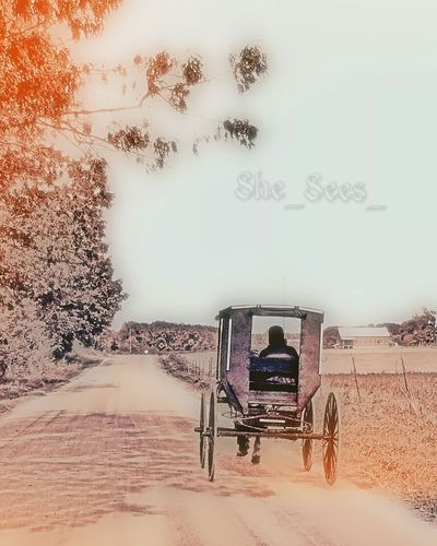 Buggy Ride Buggy Amish Girl Amish Country Amish Countryside Girl Rural Scene Travel Outdoors Barn Field Sky Solitude Country Person She_sees_