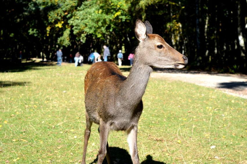 Animal Bambi Beautiful Creatures Beauty In Nature Close Up Close-up Free Green Hirsch Nature Wild Animals Ziegen