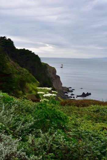 Beauty In Nature Sea Scenics Nature Sky No People Day Lands End Trail Rainy Days Rain San Francisco