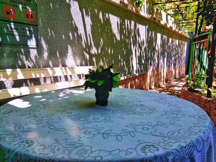 Beauty In Nature Beautiful EyeEmNewHere First Eyeem Photo Summer Memories 🌄 Bulgaria Sofia, Bulgaria Bulgaria❤️ Europe Trip Travel Happy Pretty♡ Pretty Flower Flowers Morning EyeEm Best Shots EyeEm Nature Lover EyeEm Gallery Tree Water Blooming Topiary The Street Photographer - 2018 EyeEm Awards The Great Outdoors - 2018 EyeEm Awards