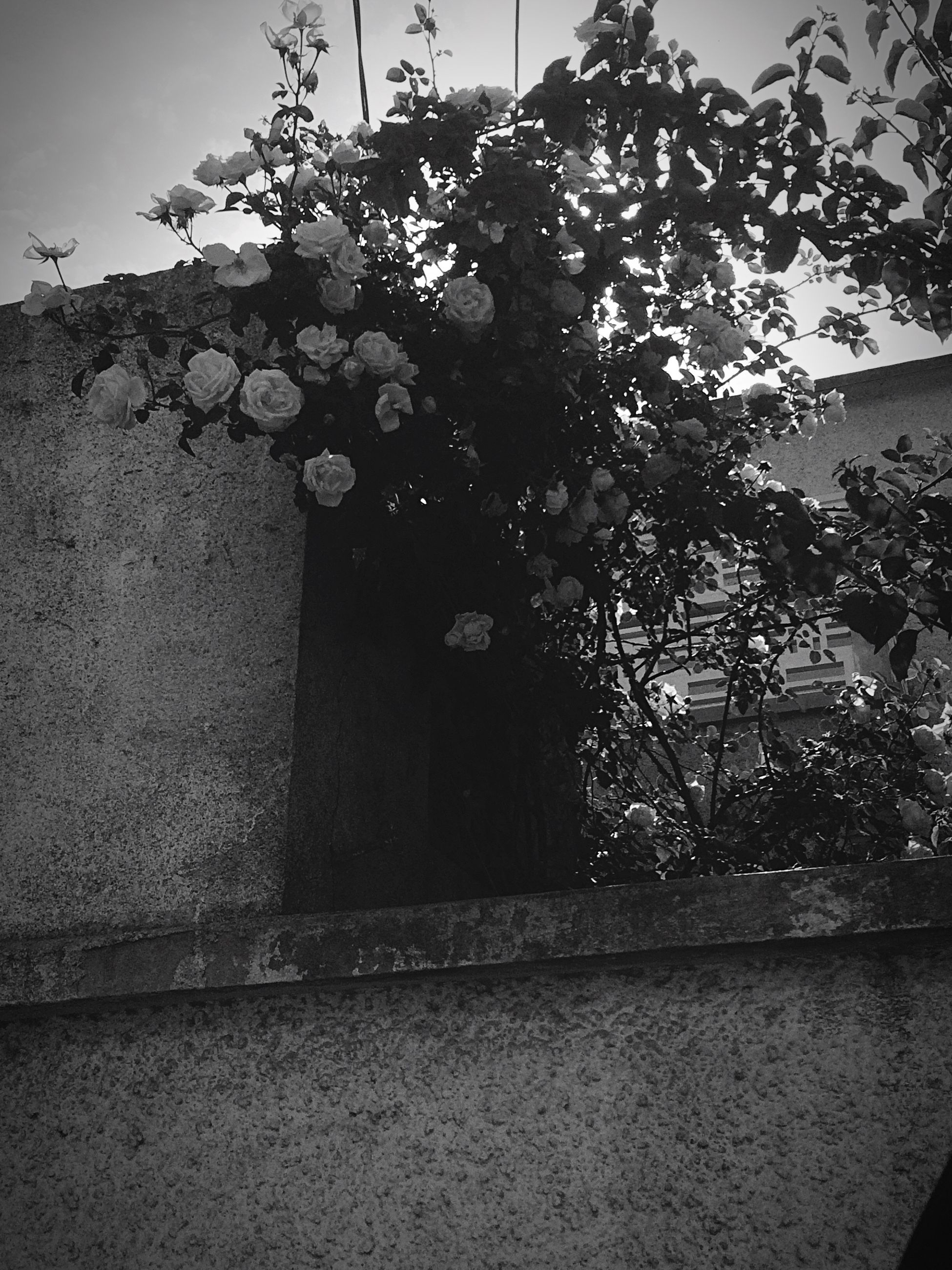 growth, tree, no people, day, architecture, nature, outdoors, built structure, plant, building exterior, flower, close-up