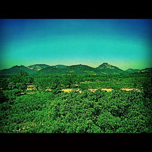 Forest Myanmar Dawei Landscping HDRgreentrees