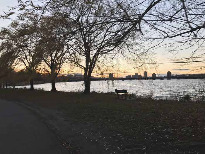 Boston, Tree Boston Water Nature Sky Outdoors Beauty In Nature Branch Day Chill Sunset
