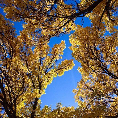 Boston Autumn Sky Blue Wave JohnRuggieri Leaves Trees New England  Landscape Nature