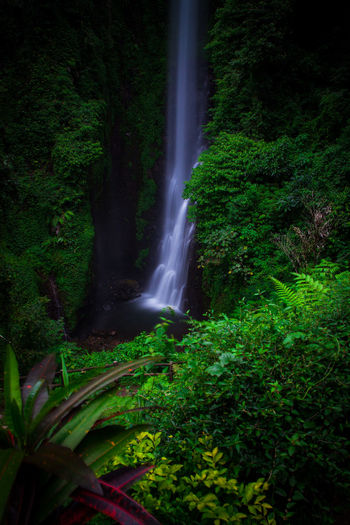 putuk truno Long Exposure Nature Waterfall Water Motion Social Issues Nature Green Color Beauty In Nature Scenics Landscape Forest Outdoors No People Freshness Day