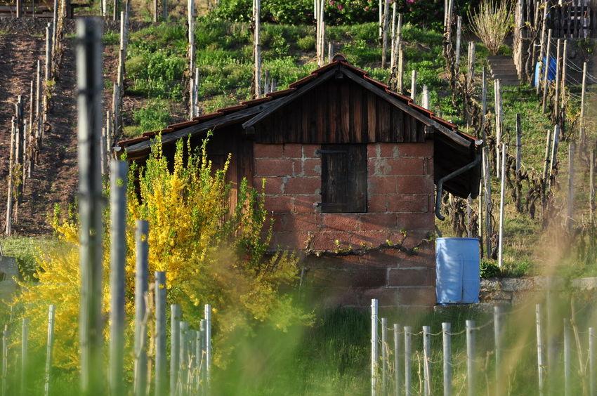 Baden-Württemberg  Hütte Cabin Garden Shack Hut Traditional Cabin Vineyard Viniculture Water Vessel