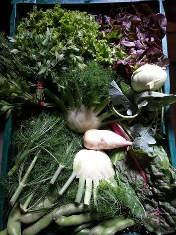 What we grow Csa Solawi Vegetable
