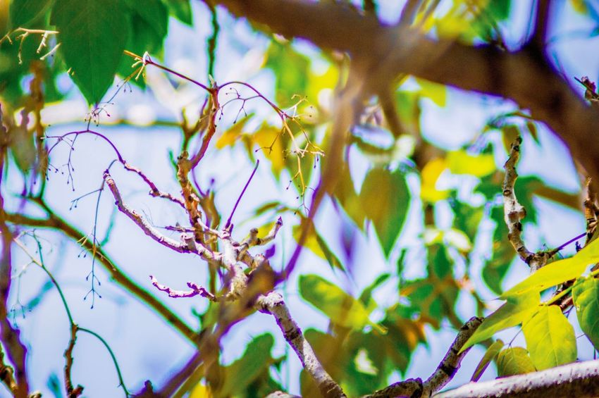 Plant Growth Beauty In Nature No People Nature Close-up Day Tree Tranquility Branch Green Color Selective Focus Leaf Plant Part Focus On Foreground Outdoors Flowering Plant Flower Vulnerability  Freshness