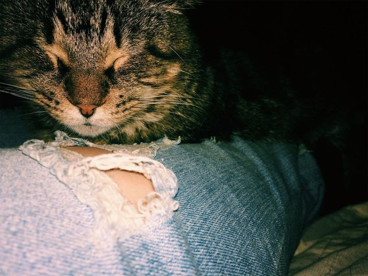 One Animal Domestic Cat Animal Themes Pets Mammal Domestic Animals Feline Business Stories