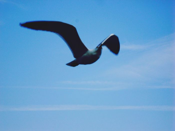 Seagull Sky Büyükada Prinkipo Princeislands