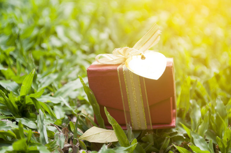 Close-up of small gift box on field