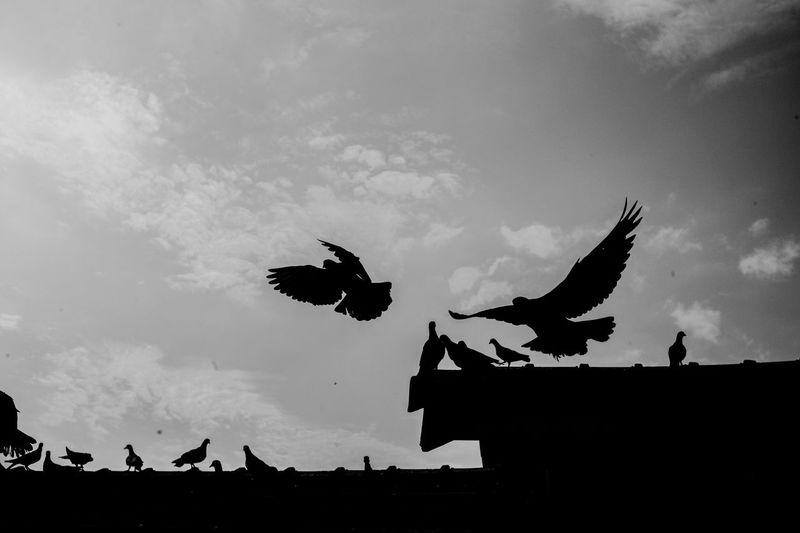 Take flight Birds Blackandwhite Streetphotography Monochrome Shillouette Wings Flight
